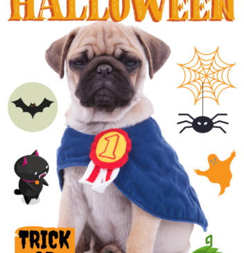 Popular Halloween Costumes For Your Pets At Amazon